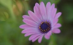 Magical Beauty (shelley.sparrow) Tags: magicalbeauty tranquility daisy nikon winter softfocus bokeh softness nature shelleysparrow brisbane queensland australia light sunlight goldenhour dreamy