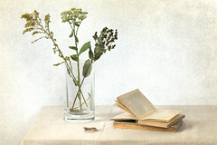Open Book and Dry Flowers (suzanne~) Tags: stilllife tabletop book vase indoor flower weed texture autumn