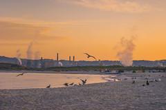 Sunrise at Rosignano (petrapetruta) Tags: soda solvay sea gulls factory morning tuscany sonya7