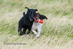 Playing (Flemming Andersen) Tags: outdoor playing nature pet animal hurupthy northdenmarkregion denmark dk