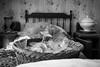 (Russo 86) Tags: biancoenero blackandwhite blackwhite bnw monocromo monochrome greyscale interno interior bed letto bicchieri glasses cesta