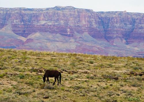 Don't Fence Me In, Vermillion Cliffs, AZ 2-15