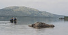 img_5681_35642005894_o (CanoeMassifCentral) Tags: canoeing femunden norway rogen sweden