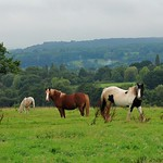 Horsing Around in the Forest of Dean! thumbnail