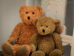 Sometimes Best Buddies (HTBT) (13skies) Tags: htbt teddybeartuesday chair arm sitting hug friends like love bliss happyteddybeartuesday fun tuesday attraction pals buddies bears family