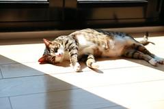 Sunbathing (superzookeeper) Tags: canoneos5dmarkiv ef2470mmf28liiusm cat 5dmk4 5dmkiv hk hongkong zzz eos animal catsofflickr digital favorites nap sleep sleeping
