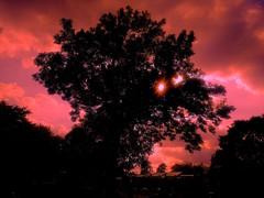 I'd Paint the Sky If I Could (esala.kaluperuma) Tags: sky clouds sunset sunrise sulehute silhouette sony sonyxperia esalakauperuma esala uk birmingham midlands westmidlands