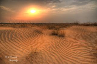 Details of the desert!