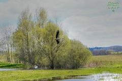 Landscape with stork... (Jurek.P) Tags: mazury masuria landscape birds stork bocian water poland polska spring wiosna jurekp sonya77