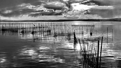 Shadows over the lake (gerard eder) Tags: world travel reise viajes europa europe españa spain spanien valencia landscape landschaft lake lago lagodelaalbufera see albuferalake albufera bw sw blackandwhite natur nature naturaleza outdoor clouds wolken nubes wasser water naturschutzgebiet nationalpark blackwhite