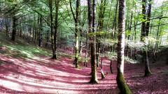 Bosque (jumaro41) Tags: bosque árbol senderismo ejercicio eugi navarra green verde hojas luz life vida monte montaña naturaleza natural nature mountain paisaje tree troncos