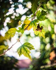 Swirly (rickmcnelly) Tags: bokeh plant swirly kernpaillard switar 25mm14 ar gx8 kernpaillardswitar25mm14ar