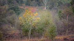 Look At Me (gerainte1) Tags: autumn trees colour brimham yorkshire