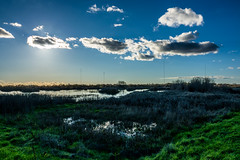 Cosumnes River Preserve Wetlands (randyherring) Tags: ca california wetland elkgrove centralcaliforniavalley afternoon aquaticbird outdoor waterfowl park cosumnesriverpreserve galt unitedstates us