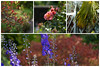 Early autumn colour at Borde Hill (Explored) (hehaden) Tags: berries palm tree flowers delphinium rose autumn fall garden bordehill haywardsheath sussex collage