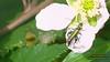 201 (bebsantandrea) Tags: levanto baiedellevante liguria natura campagna wild giardino fiori rosa pesco ciliegia fico ficodindia carciofo formica topo libellula mosca zanzara grillo ape vespa lucertola lizard farfalla butterfly riccio cimice ramarro afide pianta albero ragnatela gocce raindrop microcosmo sfingedelgalio farfallacolibrì ragno spider limone arancio arancia boragine impollinatrice cicala autunno estate primavera inverno bruco margherita zucca lampone fragola mantidereligiosa gallina coniglio coccinella kiwi