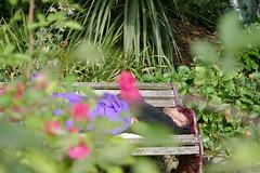 P1040587 (harryboschlondon) Tags: 19thseptember2017 plants trees flowers people green homeless