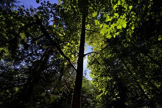 Silhouettes and shadows (A walk through Goldstream Provincial Park in British Columbia)