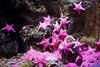 IMG_0671 (10Rosso) Tags: acqua acquario genova pesci pesce mare acquariodigenova aquarium genovaacquarium