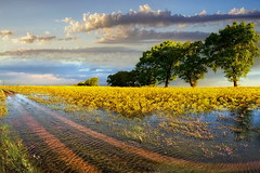 Dopo la pioggia (Zz manipulation) Tags: art ambrosioni zzmanipulation paesaggio pioggia natura campagna water giallo