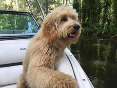 Kizzie's Arlo loves boating!