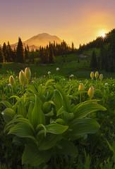 Sunset in the Mountains (Mt Rainier NP, WA) (Sveta Imnadze) Tags: nature landsscape mtrainier mtrainiernp wa hiking outdoors trail nachespeaklooptrail sunset wildflowers