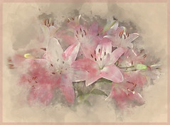 Happiness is a direction, not a place.   (Sydney J. Harris) (boeckli) Tags: flowers lily lilien blumen flower rosa pink watercolor sevenstyles blossoms blooms pflanzen plants textures texture texturen textur wasserfarben photoborder pastell pastel painterly magicunicornverybest ie