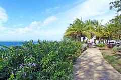 Les Antilles, La Barbade, promenade cotière sur Bridgetown (Roger-11-Narbonne) Tags: antilles labarbade bridgetown mer port fleurs