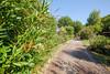 Pathway towards the villa (petitebergerie) Tags: frenchrivieracotedazurbarsurloup grasse villa provence naturalstone villaforsale houseforsale southernfrance southoffrance