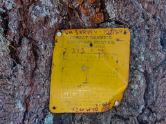 Survey Tree (ex_magician) Tags: 1959 surveytree pct pacificcresttrail trail klamathcounty oregon moik photo photos picture pictures image lightroom adobe adobelightroom lakeofthewoods endurancesports cascademountains brownmountain brownmountaintrail mountainbike mountainbiketrail singletrack