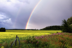 Campagne Saguenéenne en Juillet (gaudreaultnormand) Tags: arcenciel canada canola champ fleurs jaune quebec rain rainbow saguenay