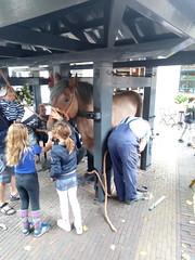 Nieuwe schoenen voor Zeeuws trekpaard (Omroep Zeeland) Tags: burghhaamstede zeeuwse smid zeeuws trekpaard
