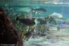 IMG_0690 (10Rosso) Tags: acqua acquario genova pesci pesce mare acquariodigenova aquarium genovaacquarium