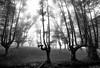 Otzarreta zuri beltz 2 (juan luis olaeta) Tags: otzarreta photoshop lightroom canoneos60d sigma1020 blakwhite blancoynegro zuribeltz naturaleza paisages landscape nieblas laiñoa fog forest basoa bosque bizkaia basquecountry euskalherria
