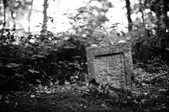 Remembrance of the dead III (Ir3nicus) Tags: nikon d700 dslr fullframe fx issum nordrheinwestfalen deutschland de outdoor germany afsnikkor50mm114g grave grab gravestone grabstein decay verfall old alt blackandwhite bw schwarzweis bokeh jüdischerfriedhof jewish graveyard