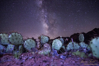 Chasing the Milky Way underneath a cactus