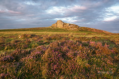 Heather n Honey (http://www.richardfoxphotography.com) Tags: haytor heather sunset dartmoor outdoors grasses moorland tor granite