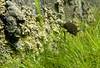 Conservation of the endangered Iberian toothcarp (Aphanius iberus) in the threatened habitats at the edge of its distribution (fartet.adra) Tags: adra fartet adrariver rioadra aphaniusiberus iberiantoothcarp cyprinuscarpio carp carpa invernaderos greenhouses intensiveagriculture almeria endemism endemismo endageresspecies especieenpeligrodeextincion albuferasdeadra wetland gambusia riverpool pond canals balsas canales riego especieamenazada conservation conservacion endangeredspecies irrigationinfrastructures