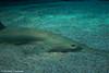 IMG_0659 (10Rosso) Tags: acqua acquario genova pesci pesce mare acquariodigenova aquarium genovaacquarium