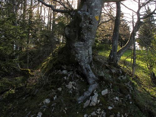 Schönenberg_064