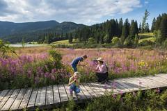 Moorlehrpfad (Oststeiermark - Urlaub im Garten Österreichs) Tags: moorlehrpfad oststeiermark lehrpfad teichalm wandern spazieren sommer urlaub