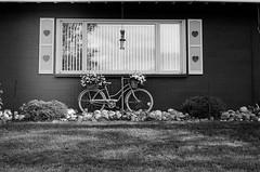 Edit -1-38 (Dane Van) Tags: ccr canadacreekranch atlantamichigan minolta xg1 kodak trix 400tx film analog