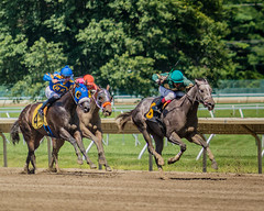 ... and down the stretch they come. (_Robert C_) Tags: monmouthpark nj horseracing d800 sigma 70200mm