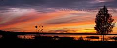 ...sommarnatt /... summer night (srchedlund) Tags: uteistugan furufjärden norrbotten sommarnatt summernight srchedlund tvillimgbjörkar twinbirches redskies water reed vass sunset