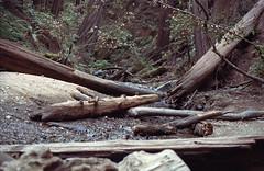 Stream (egrojd) Tags: portra400 portra kodakportra kodak canon1n muirwoods nationalparks redwoods film 35mm