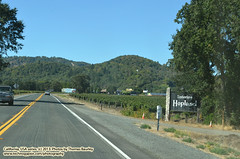 092613-022 (leafworks) Tags: roadtrips greatpacificnorthwestmove travels california pacificcoasthighway highway101 vineyards wine hopland winecountry columbia sc usa