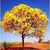 Cores da natureza. #naturalbeauty #natureza #naturephotography  #jardimdoeden #revistaxapury #eunotg #criacaodedeus #obradivina #motox2 #instamotox2 #horizonte #infinito #sky #ceuazul #ceulindo #ceu #nature #verdes #verdescampos #paisagem #paisagens #ciel (ederrabello2014) Tags: naturalbeauty infinito naturephotography ipeamarelo motox2 intagrambrasil ceulindo naturezalinda naturezaperfeita nature naturezabela revistaxapury instagran horizonte eunotg verdes instamotox2 ceuazul cieloazul sky jardimdoeden natureza paisagem cielo verdescampos ceu criacaodedeus ipe obradivina paisagens