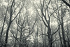 Early Autumn feeling (SASHA TURPIN) Tags: trees forest woods forêt leaves branches bw monochrome blackwhite canon 5d 24105mm france landscape moody mist brouillard fog misty silhouette arbres
