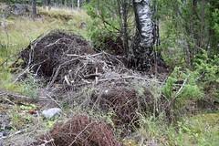 DSC_6677 (PorkkalanParenteesi/YouTube) Tags: piikkilanka porkkala porkkalanparenteesi hylätty neuvostoliitto abandoned soviet degerby suomi finland exploring