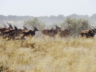 Namibia Luxury Hunting Safari 54